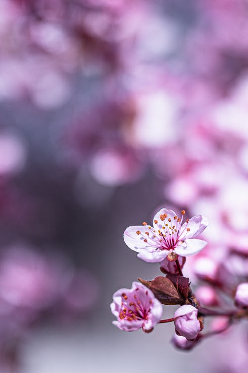 Colorful blossoming pink flowers with small delicate petals and pleasant aroma in daylight