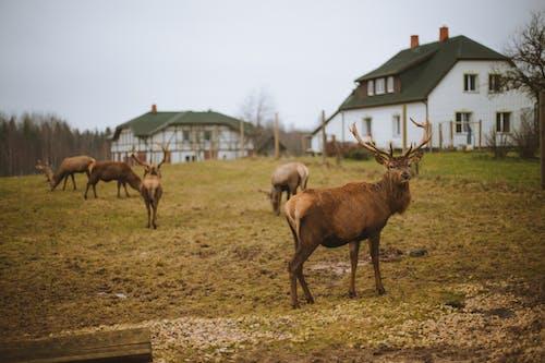 Herd of Deer on Field