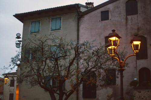 Lamp next to a Tree
