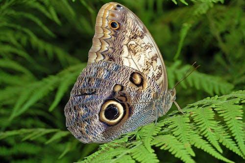 Ilmainen kuvapankkikuva tunnisteilla luonto, makro, perhonen, saniainen