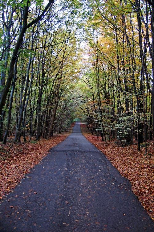 Ilmainen kuvapankkikuva tunnisteilla englanti, lehdet, metsä, putoaminen