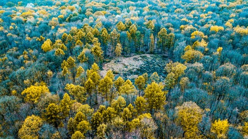 Drone view of colorful tree tops in woodland with clearing in fall in daytime