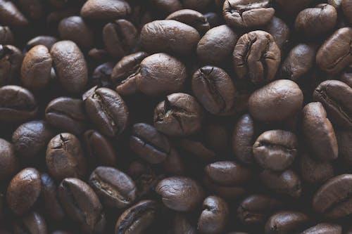 Kostenloses Stock Foto zu grano de café, hora de cafe