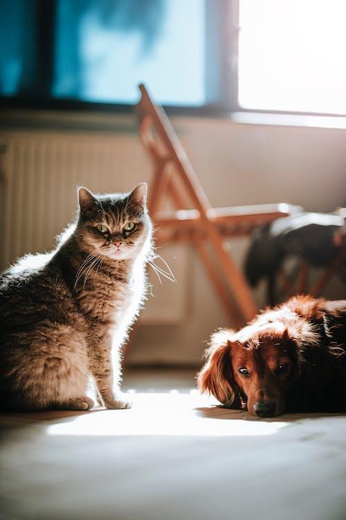 Perro Y Gato En El Suelo