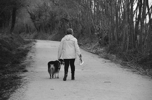 Photos gratuites de air pur, chien, dame, loisir