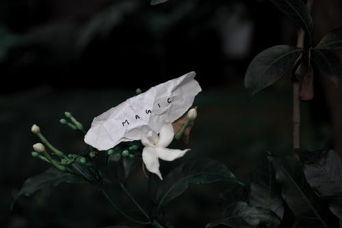 White blossoming flower near paper with title in darkness