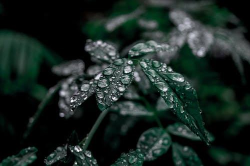 Water Drops on Dark Green Plant