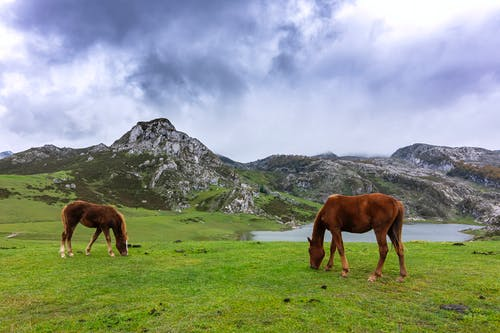 Brown Horses on Green Grass Field
