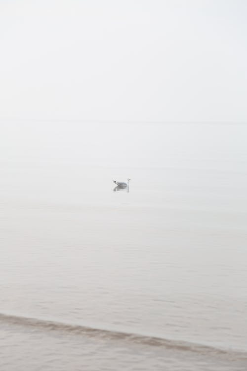 Free stock photo of isolation, seagull, seagulls, self quarantine