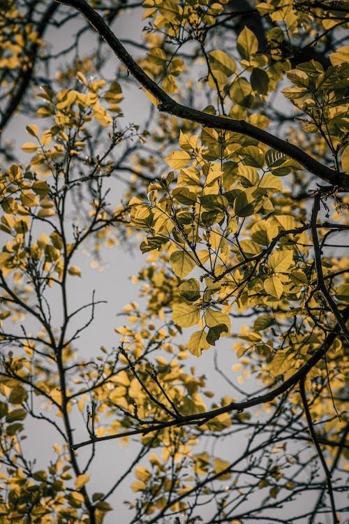 açık hava, açık hava, ağaç, ağaç içeren Ücretsiz stok fotoğraf