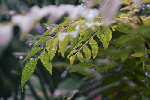 Green plant leaves covered with raindrops in park