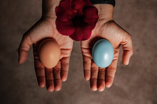 Person Holding Red Flower With 2 Blue and Pink Egg