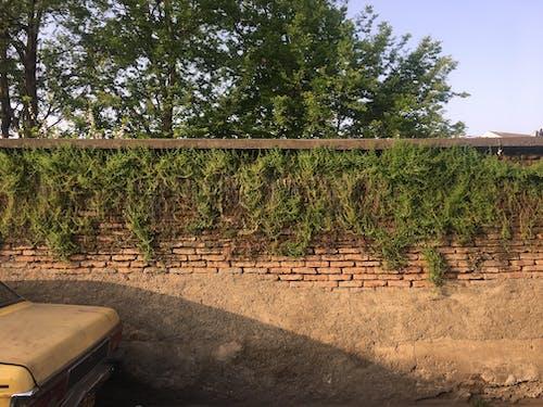 Free stock photo of green wall, wall