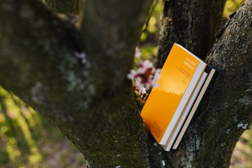 Books placed between branches of big blossoming tree on sunny day in spring