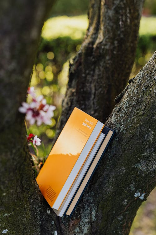 Books put between thick gray branches of blooming tree in quiet green park on sunny spring day