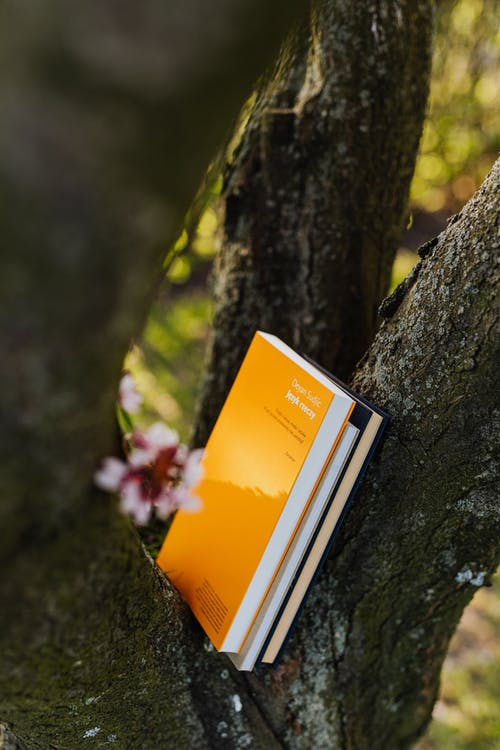 Books between gray branches of flowering tree in spring park
