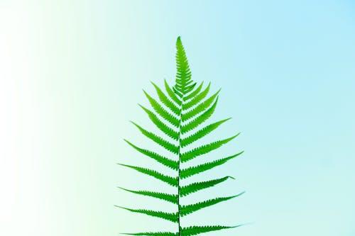 Fotos de stock gratuitas de amable, arbusto, bosque