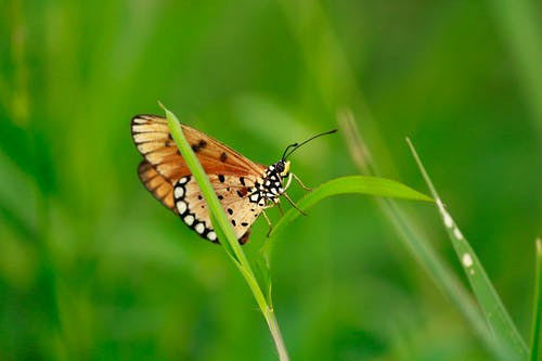 Brown Butterfly on Grass