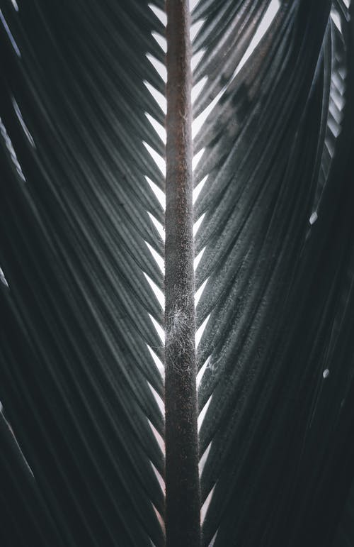 Textured leaf of palm tree in daytime
