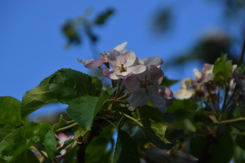 Terren Blumen | Kostenloses Foto Zum Thema Frontales Bild Tier Hubsch Katze 15