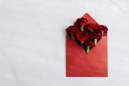 Photos gratuites de arrière-plan blanc, carte de vœux, concevoir