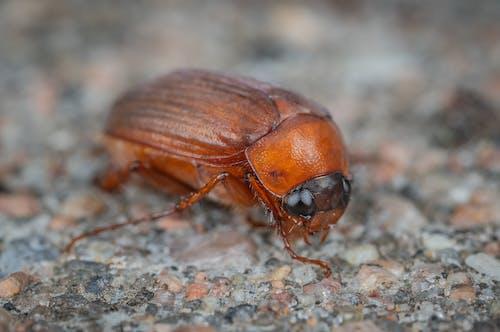 Darmowe zdjęcie z galerii z makro, owad