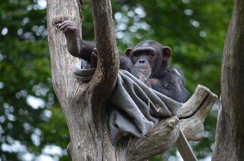 Cute monkey with blanket resting on tree branch