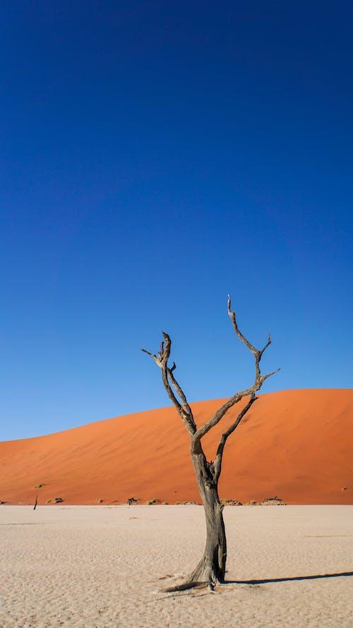 Bare Tree on Desert Under Blue Sky