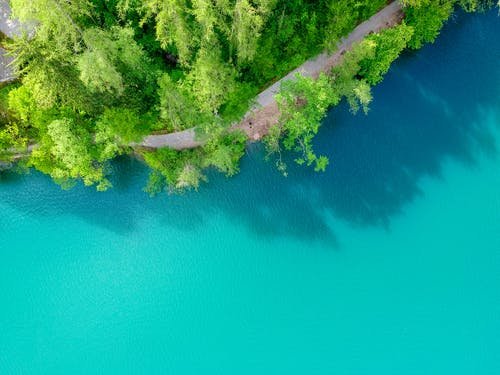 Aerial View of Green Trees Beside Blue Body of Water