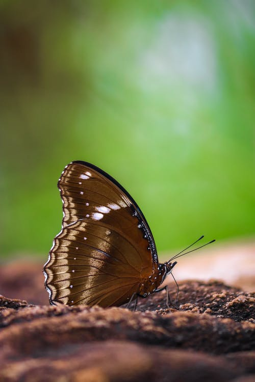 Close-Up Photo of Butterfly on Soil
