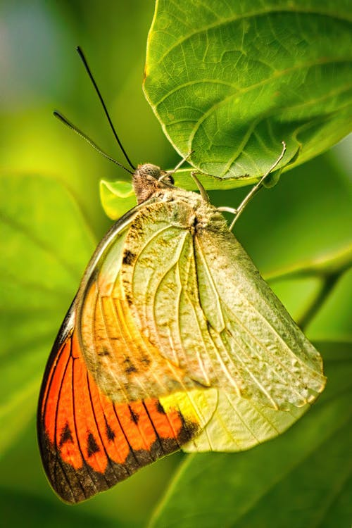 Close-Up Photo of Butterfly Perched on Green Leaf