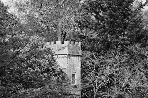 Photos gratuites de architecture médiévale, bois, créneaux, la défense