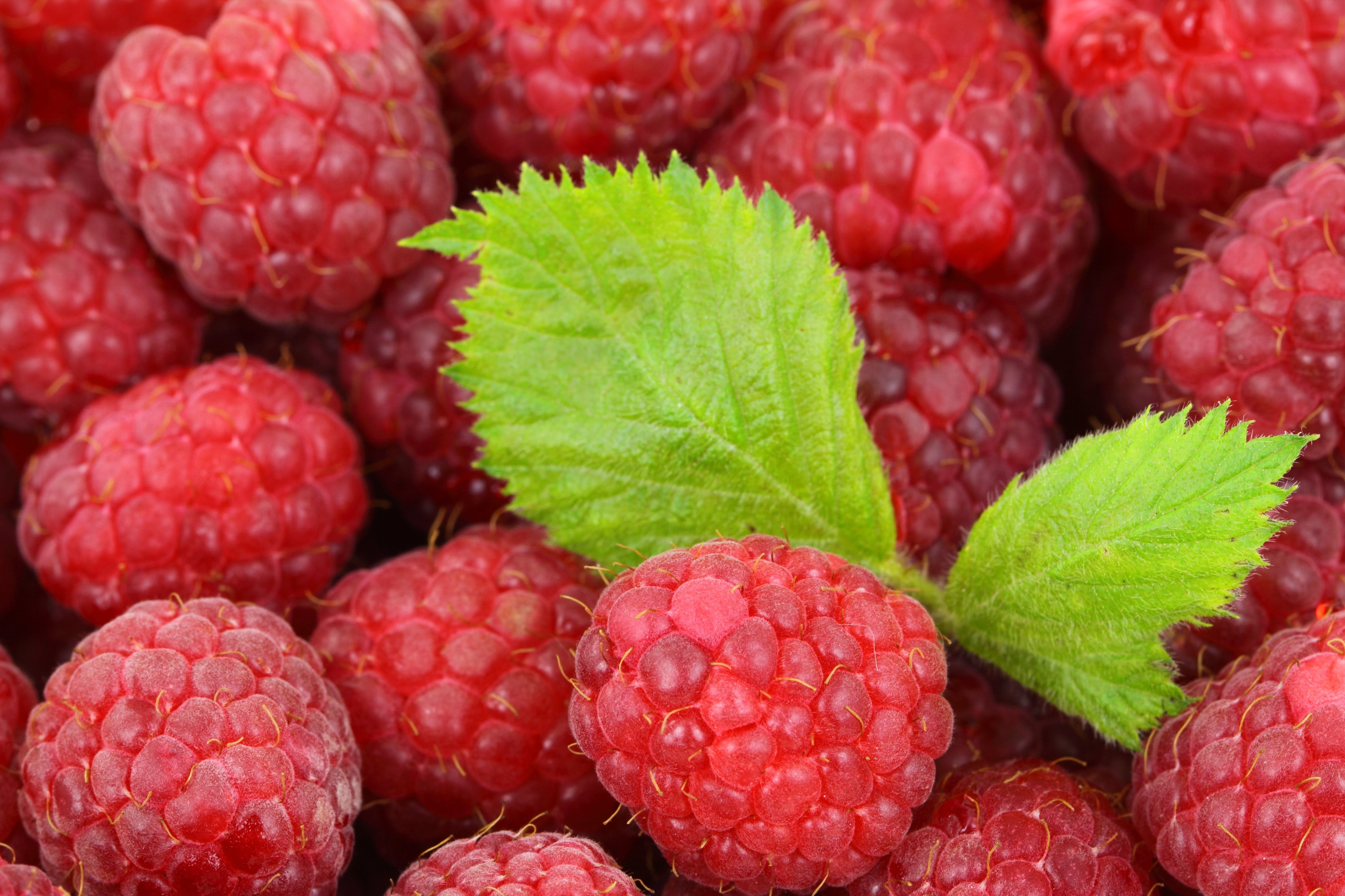 Red Raspberries With Green Leaves