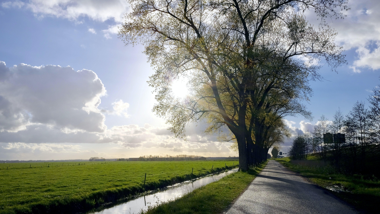 bäume, feld, friedlich