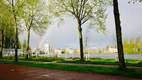 Foto d'estoc gratuïta de aigua, arbres, arc de Sant Martí, carrer