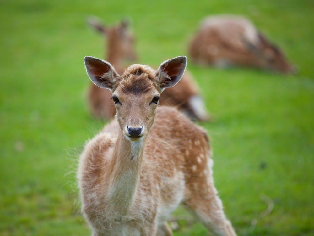Shallow Focus Photography of Brown Deer