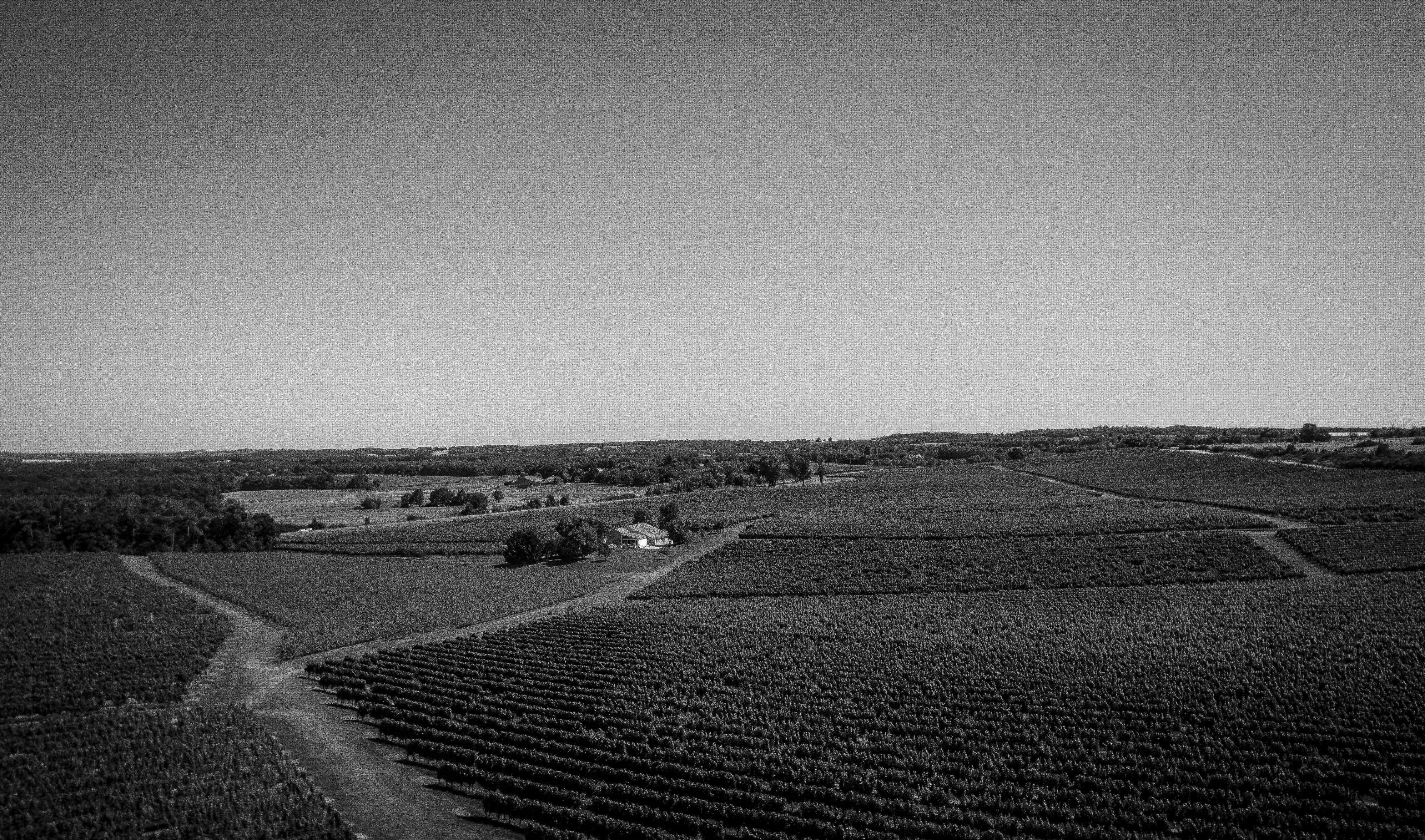 Free stock photo of black and white natur vineyard wine franck