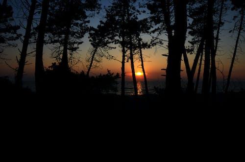 คลังภาพถ่ายฟรี ของ ชายหาด, ป่า, พระอาทิตย์ตกที่ชายหาด