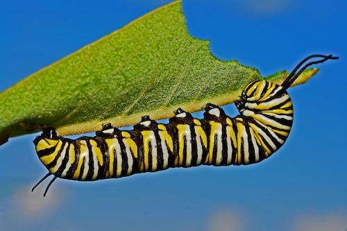 Ilmainen kuvapankkikuva tunnisteilla hidas, hyönteinen, kuvio, luonto