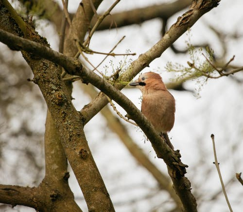 Small Podoces panderi bird sitting on tree twig in forest