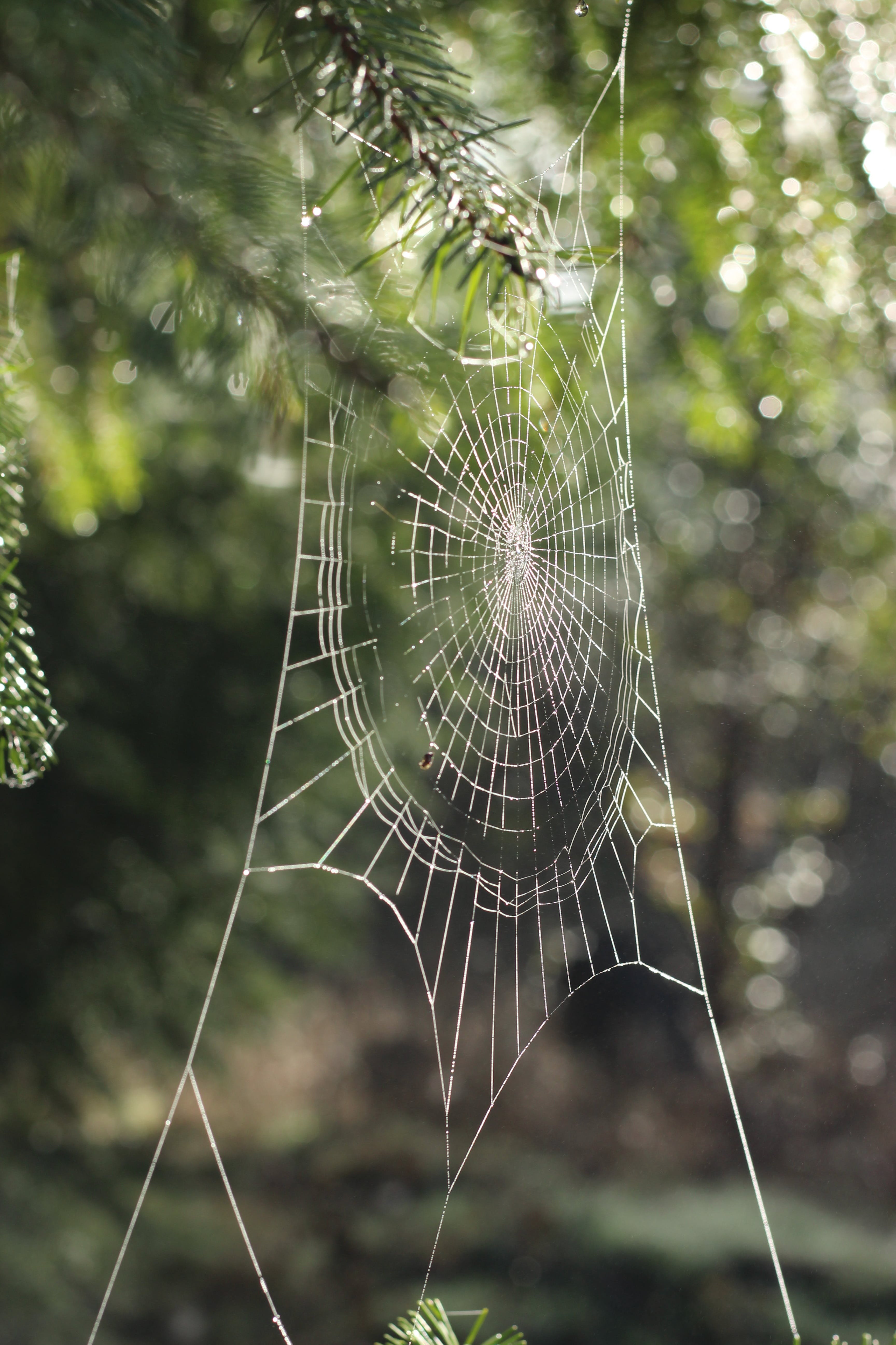 Spider's Web in Closeup Photography