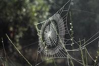 web, spiderweb, spider web