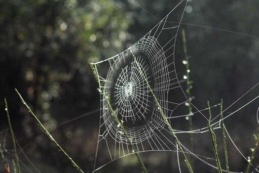 Free stock photo of web, spiderweb, spider web