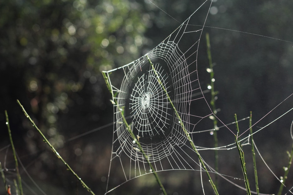 spider web, spiderweb, web