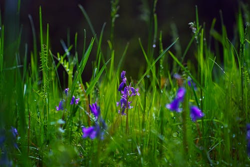 Free stock photo of dew, flowers, greass