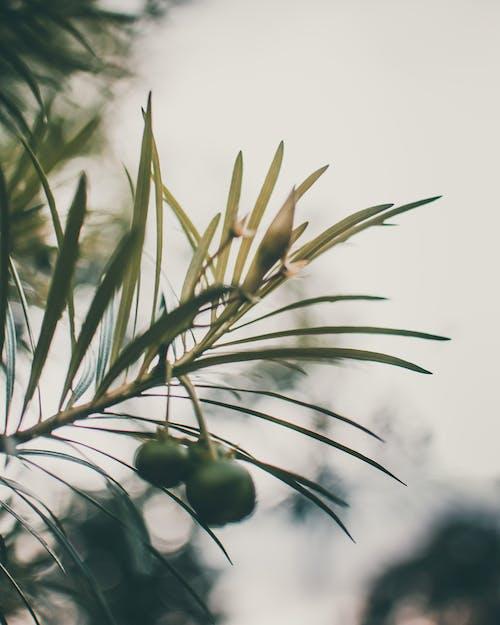 Photos gratuites de angle faible, arbre, arbuste, bio