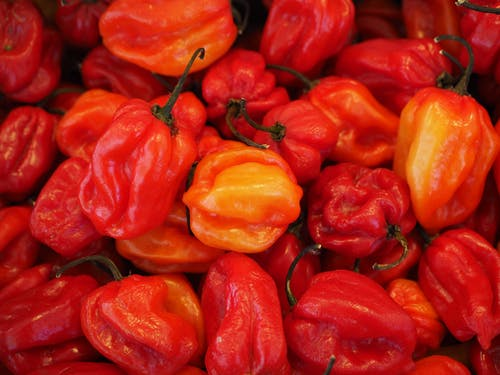 Foto profissional grátis de capsicum chinense, chili, condimentado, habaneros