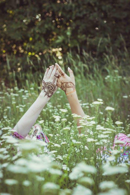 人, 人們手牽著手, 夏天, 夏季 的 免費圖庫相片