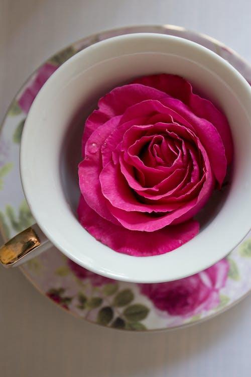 Pink Rose in White Ceramic Mug