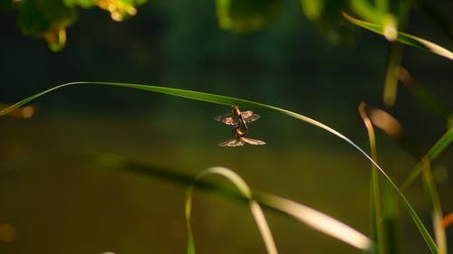 天性, 昆蟲, 蜻蜓 的 免费素材照片